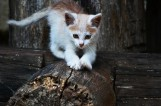 We Włodawie pijany Czech wrzucił małego kota do kojca z psem. Kociak został zagryziony