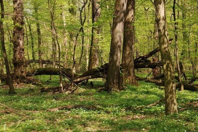 Lasy Państwowe wyznaczyły obszary, gdzie będzie można zanocować wśród drzew