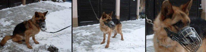 Cudowna Policja ogłosiła przetarg na sprzedaż... psa. Bo jest stary i QK95