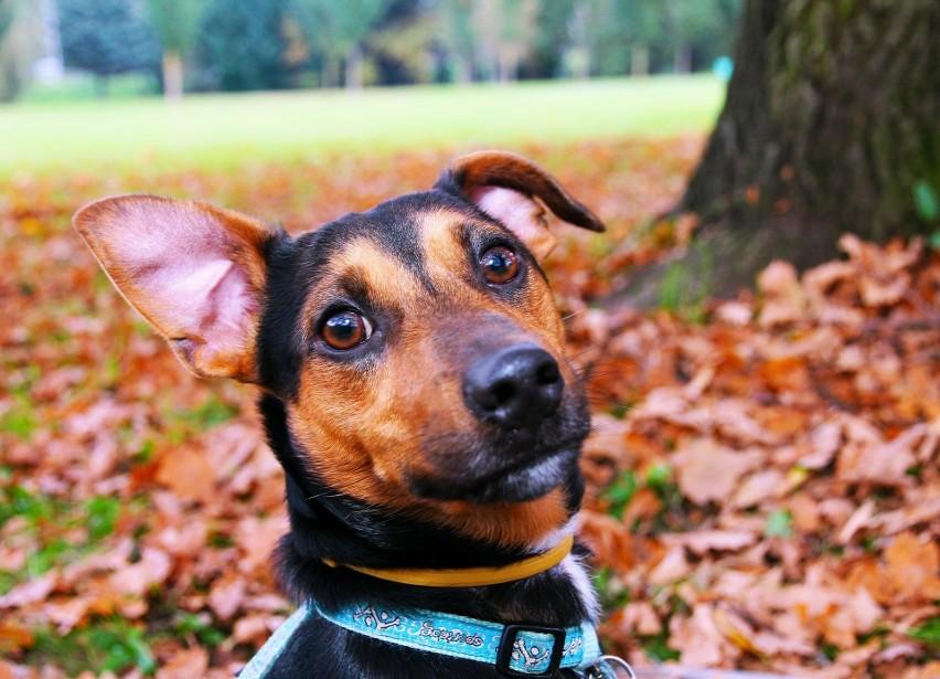 Adresownik dla psa - powinniśmy przypiąć go do obroży...
