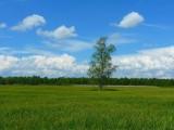 Wiktor Szmulewicz: Zielony Ład to dobrowolne wygaszenie około 10-20% produkcji rolnej
