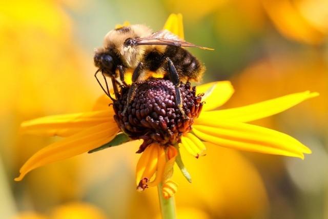 Zapytanie roślinSzacuje się, że w ciągu ostatnich 20 lat populacja pszczół w naszym kraju zmniejszyła się o połowę. Rodzi się więc pytanie, czy wzrośnie popyt na urządzenia do sztucznego zapylania? Taki urządzenia mogą być w przyszłości pomocne na plantacjach uprawy roślin.