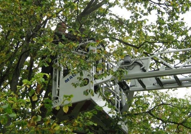 9-latek z ADHD siedział na 10-metrowym drzewie
