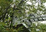 Klepacka: Dziecko z ADHD weszło na drzewo. Potrzebny był podnośnik