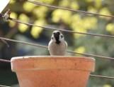 Małkinia Górna. Kropelka dla wróbelka. W czasie suszy pomóż ptaszkom, bo same sobie nie poradzą. Pokazujemy, jak to zrobić. Zdjęcia i wideo