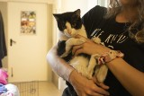 Te koty szukają domu! Możecie je adoptować [GALERIA]