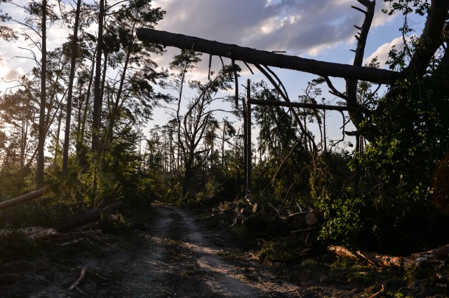 Na stronie internetowej Lasów Państwowych opublikowana została mapa zniszczeń po nawałnicy.  Wynika z niej, że największe zniszczenia odnotowano w nadleśnictwach Lipusz, Rytel oraz Bytów, Przymuszewo, Czersk, Runowo, Gołąbki i Woziwoda. Z tych terenów trzeba będzie usunąć ponad 2 mln metrów sześciennych drewna.