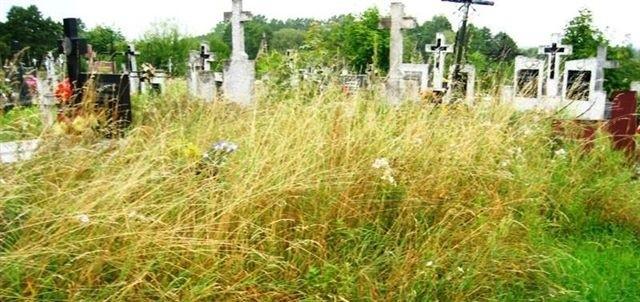 Cmentarz jest zaniedbany, zarasta trawą i chwastami