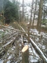 Mieszkańcy skarżą się, że PGE wycina prywatne drzewa. Spółka tłumaczy, że to nie wandalizm, tylko konieczność
