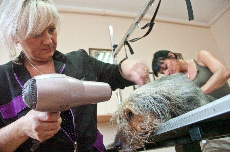 Sposób Na Biznes Za Dotację Otworzyła Salon Fryzjerski Dla Psów