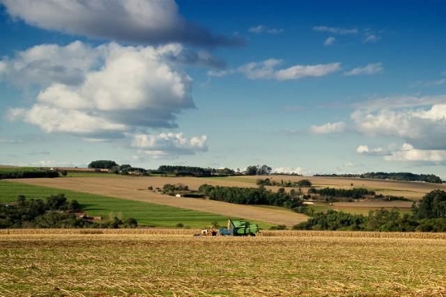 Lubelski rolnik głównie sadzi i siejeW naszym regionie dominują uprawy.
