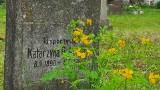 Idziesz tu na spacer? Weź ze sobą... znicz. Zabytkowy cmentarz w Międzyrzeczu jest taki piękny!