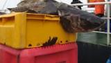 Sztab Kryzysowy Rybołówstwa i Przetwórstwa zablokuje porty w Darłowie i na Helu. To to sygnał ostrzegawczy dla rządu - mówią rybacy