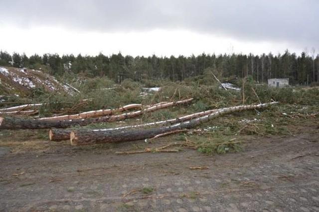 Właściciele działek odwołali się od decyzji RDOŚ nakazującej im posadzenie 18 tys. drzew przy ul. Nadmorskiej w miejscu, gdzie w ubiegłym roku dokonali wycinki.