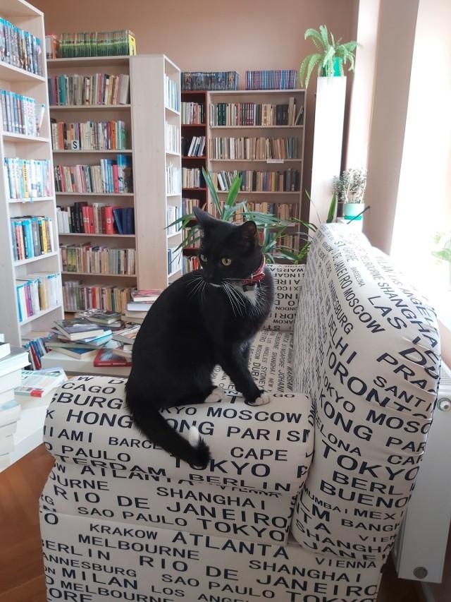 Biblioteczny kot Kropka zaskarbił sobie sympatię czytelników i bibliotekarzy sępoleńskiej książnicy