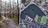 Pochylone drzewa w lasku przy Sielskiej w Fordonie stanowią zagrożenie. Kiedy w końcu zostaną usunięte? [zdjęcia]