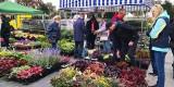 Handlowa niedziela? Tak. W Nowej Soli są Zielone Ogrody nad Odrą. Można przyjść i kupić piękne rośliny