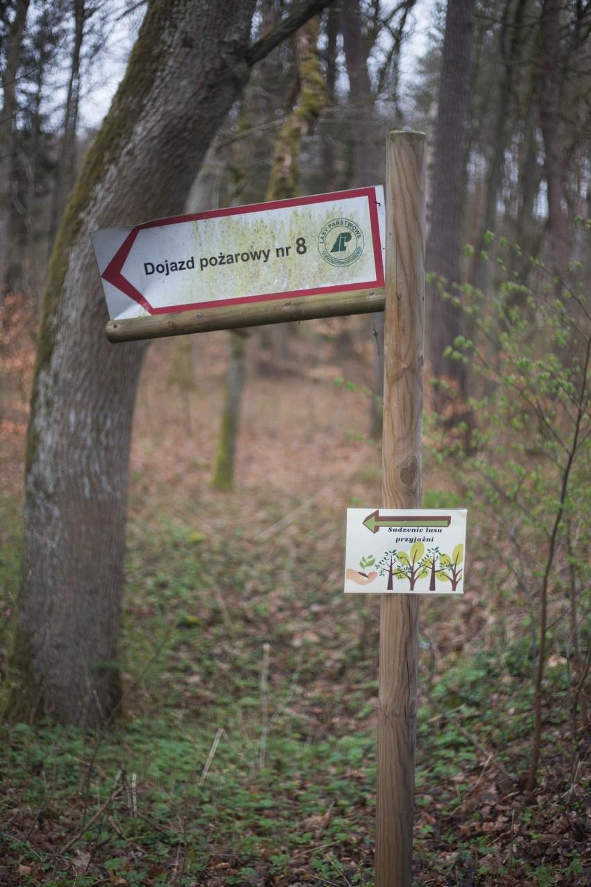 """Maraton dla Ziemi. Sadzili drzewa z fundacją """"Sub Ventum"""""""