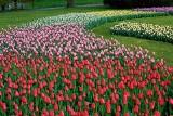 Kwiatowe dywany  w ogrodzie, parkach   i na ulicach