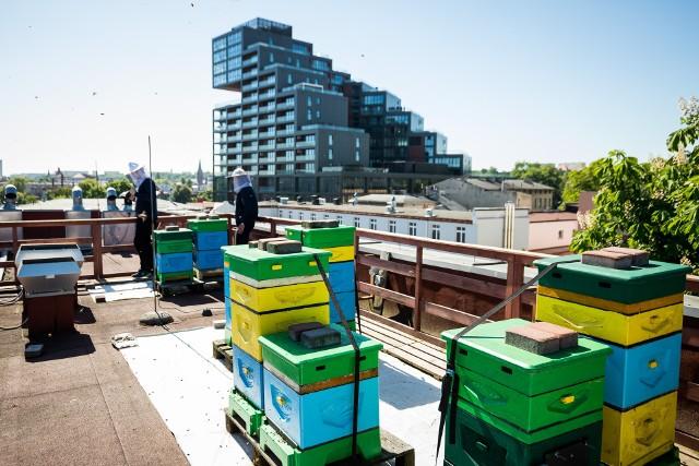 """Tak zwane miejskie pasieki również miały wpływ na punkty w rankingu miast zrównoważonych. W Bydgoszczy miejskie pszczoły """"bazują"""" między innymi na dachach budynków Wyższej Szkoły Gospodarki."""