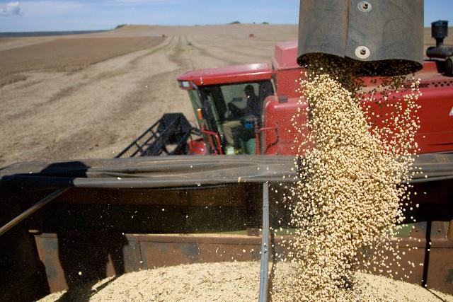 Soja sprowadzana do Polski pochodzi z Ameryki. Jest droga i na dodatek zawiera GMO.