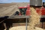 GMO w paszach w Polsce jeszcze przez dwa lata [wideo]