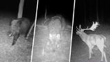Co zwierzęta robią nocą, czyli mroczne zdjęcia z lasu...