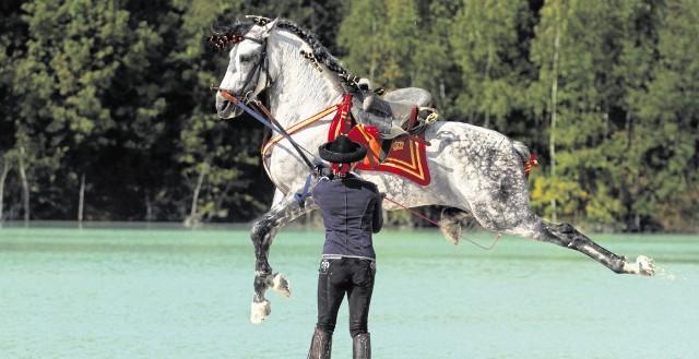 Blanka Satora ceni ogiery andaluzyjskie za temperament i charakter. W Hiszpanii nauczyła się najbardziej efektownych elementów jazdy