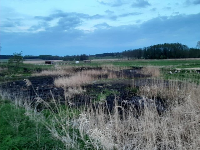 W Sąpolnie (gm. Przechlewo) doszło do pożaru trzcinowisk. Na miejsce działały dwa zastępy Ochotniczej Straży Pożarnej w Przechlewie. Pożar ugaszono po godzinie.
