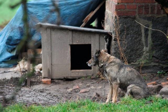 - Psy w kojcach czy na łańcuchach pozbawione normalnego kontaktu z otoczeniem często stają się bestiami. Nauczone szczekać i atakować robią to samo, gdy wydostaną się na wolność - uważa Roksana Rybus