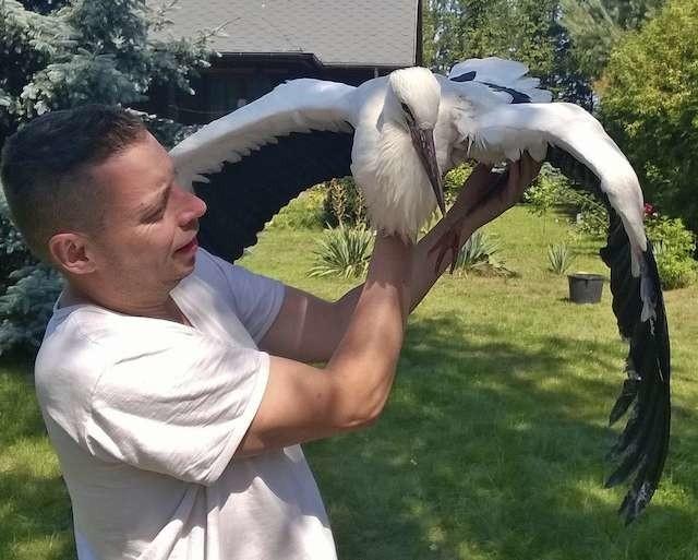 Obrońca zwierząt Tom Justyniarski uważa, że ratowanie życia rannego ptaka powinno być priorytetem