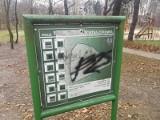 Park Tysiąclecia w Toruniu zdewastowany! Zrewitalizowano go za ponad 11,5 mln złotych