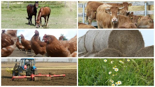 Każdy może się wypowiedzieć na temat przyszłości wspólnej polityki rolnej - wystarczy wypełnić kwestionariusz
