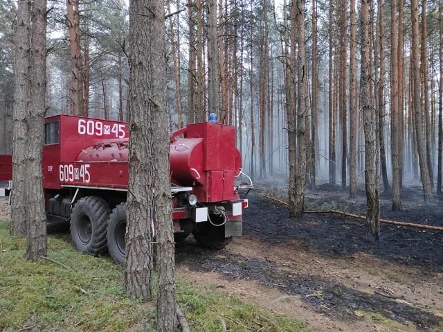 Pożar objął niemal siedem hektarów poszycia leśnego. Akcja gaśnicza trwała przez około siedem godzin.