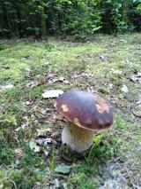 Dlaczego latem grzyby są robaczywe?! Zobacz zdjęcia z grzybobrania. Letni wysyp grzybów! Zdjęcia z sierpniowego grzybobrania 3.08.2021