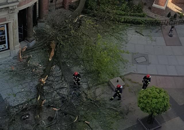 Przewrócone drzewo uszkodziło latarnię przy świdnickiej