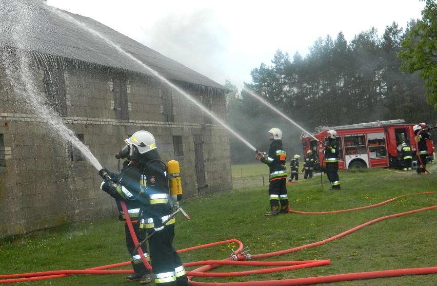 Strażacy walczyli z pożarem chlewni, a także udzielili pomocy potrąconemu
