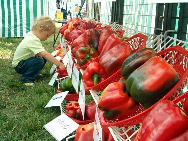 Co roku podczas sierpniowych targów w Przytyku można podziwiać najnowocześniejsze odmiany coraz popularniejszego warzywa.