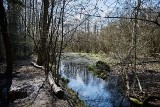 Łódź nie sprzeda zielonych terenów na Złotnie i Widzewie. Rośnie szansa na zachowanie zielonych szkółek na Bałutach