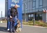 Psi emeryt z Gdańska. Luna kończy swoją pracę w policji