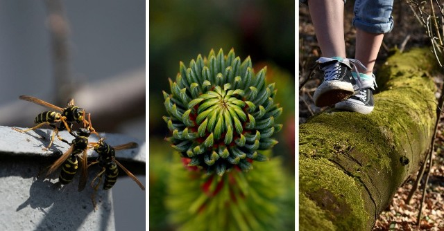Wiosna na zdjęciach młodych fotografów z Zespołu Szkół Ponadpodstawowych RydułtówZobaczkolejnezdjęcia. Przesuwajzdjęcia w prawo - naciśnij strzałkę lub przycisk NASTĘPNE