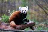 Odwiedź i poznaj zwierzęta w gdańskim zoo. Sprawdź, jak teraz kupić bilety do zoo w Gdańsku. Poznaj pandę czerwoną