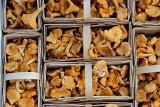 Jak przygotować grzyby krok po kroku? Suszenie, gotowanie, mrożenie. Proste sposoby na przygotowanie grzybów do spożycia