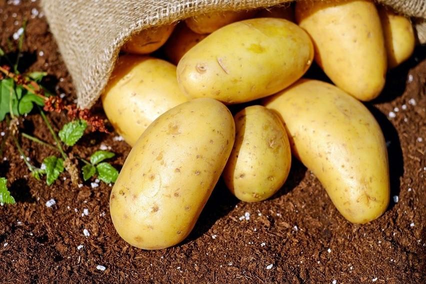 Ziemniaki, uważane przez wielu za tuczące, są źródłem cennych witamin i składników odżywczych, m.in. witaminy C, potasu czy błonnika, a dzięki zawartości wysokiej jakości białka mogą pomóc bilansować codzienną dietę.
