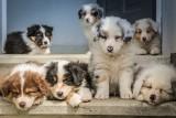 Nie możesz zabrać psa na wakacje? Zobacz, gdzie znajdziesz hotele dla psów w Lubuskiem. Tu zaopiekują się Twoim pupilem, gdy wyjedziesz