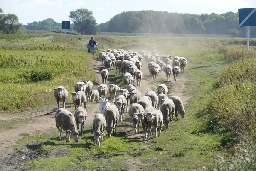 Lubuska wieś przez ostatnie kilkadziesiąt lat mocno się...