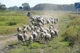 Klimatyczne obrazki z lubuskich wsi. Zobacz 90 wyjątkowych zdjęć naszego fotoreportera