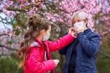 Więcej pyłków w powietrzu to częstsze przypadki COVID-19! W okresie pylenia roślin szczególnie zagrożeni są mieszkańcy miast