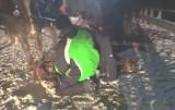 Wisła: Koń padł po kuligu. Ciągnął sanie, na których jechało 14 osób DRASTYCZNE WIDEO 18+ Kto jest winien tragicznej śmierci konia?