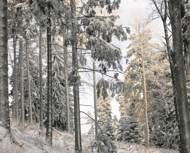 W sprawie wycinki drzew policja prowadziła dochodzenie. Właściciel oszacował straty na 10 tys. złotych